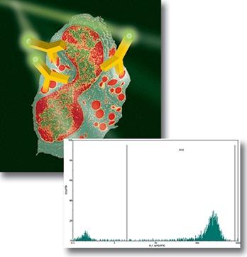 Внутриклеточное окрашивание клеток (острая миелоидная лейкемия)