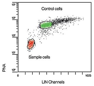 Гибридизация клеток в гибридизацонном растворе, содержащем зонд PNA/FITC