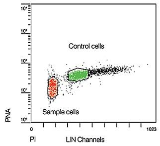 Смешивание клеток с гибридизационным раствором без зонда