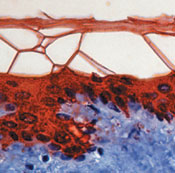 реагенты для иммуногистохимических исследований