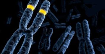 Vysis DNA FISH