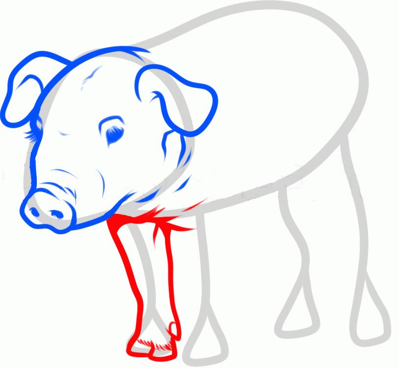 Мультиплексный анализ - Маркеры лабораторных животных - Свиньи