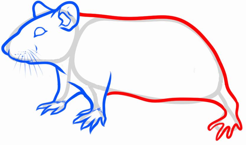 Мультиплексный анализ - Маркеры лабораторных животных - КРЫСЫ