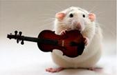 Наборы ИФА для диагностики крыс