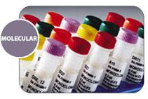 SSP Minor Histocompatibility Antigen Primer Sets / Набор реагентов для изучения GVHD (РТПХ)