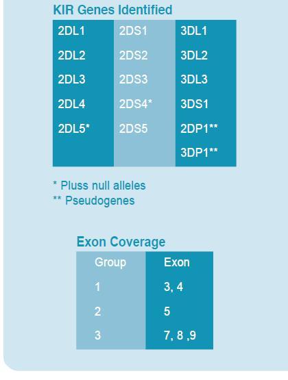 Варианты генов KIR, определяемые набором KIR SSO Genotyping