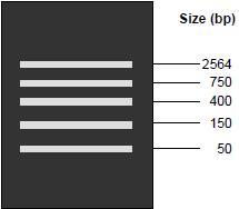 marker DNA size