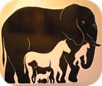 ИФА наборы для диагностики животных