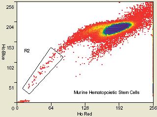 минорная популяция клеток-предшественников